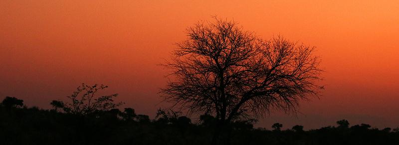 Sunset at Madikwe game reserve