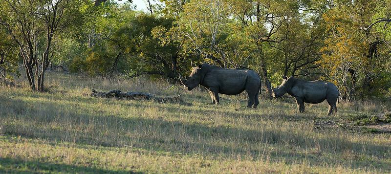 At Mala Mala game reserve