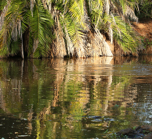 Reflection in a river - Meru National Park - Kenya