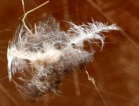 Feathers caught in a spider web