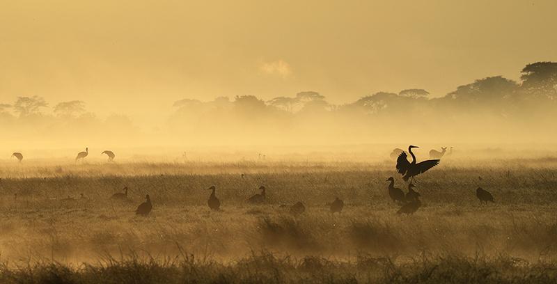Kafue National Park - morning mist