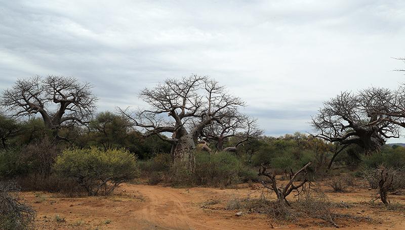 Parfuri - South Africa