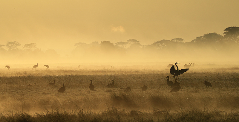 Kafue National Park - morning mist