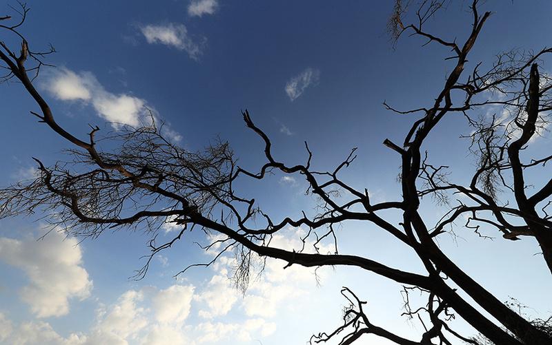 Trees at Amboseli - Kenya
