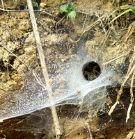 Spider webs with waterdrops - Laos