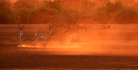 South Rift Valley - sunset in the dust
