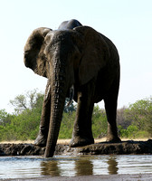 Mashatu : at the waterhole
